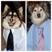 D.A.'s dogs are ready for their interview!